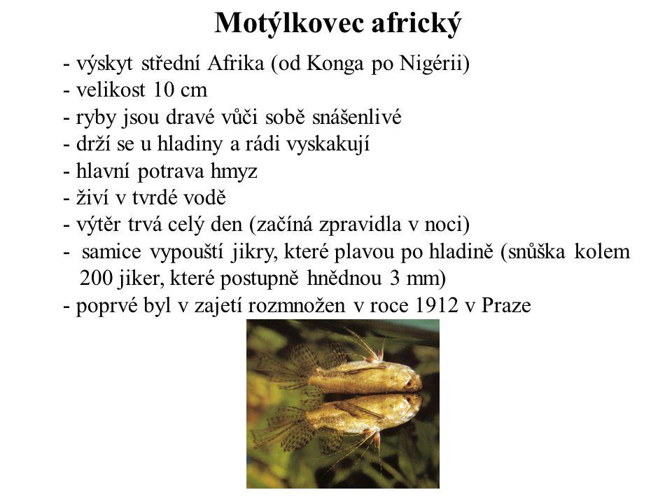 Motýlkovec africký - výskyt střední Afrika (od Konga po Nigérii) - velikost 10 cm - ryby jsou dravé vůči sobě snášenlivé - drží se u hladiny a rádi vy