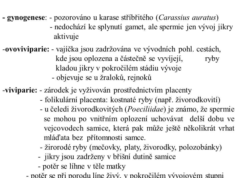 - gynogenese: - pozorováno u karase stříbřitého (Carassius auratus) - nedochází ke splynutí gamet, ale spermie jen vývoj jikry aktivuje -ovoviviparie: