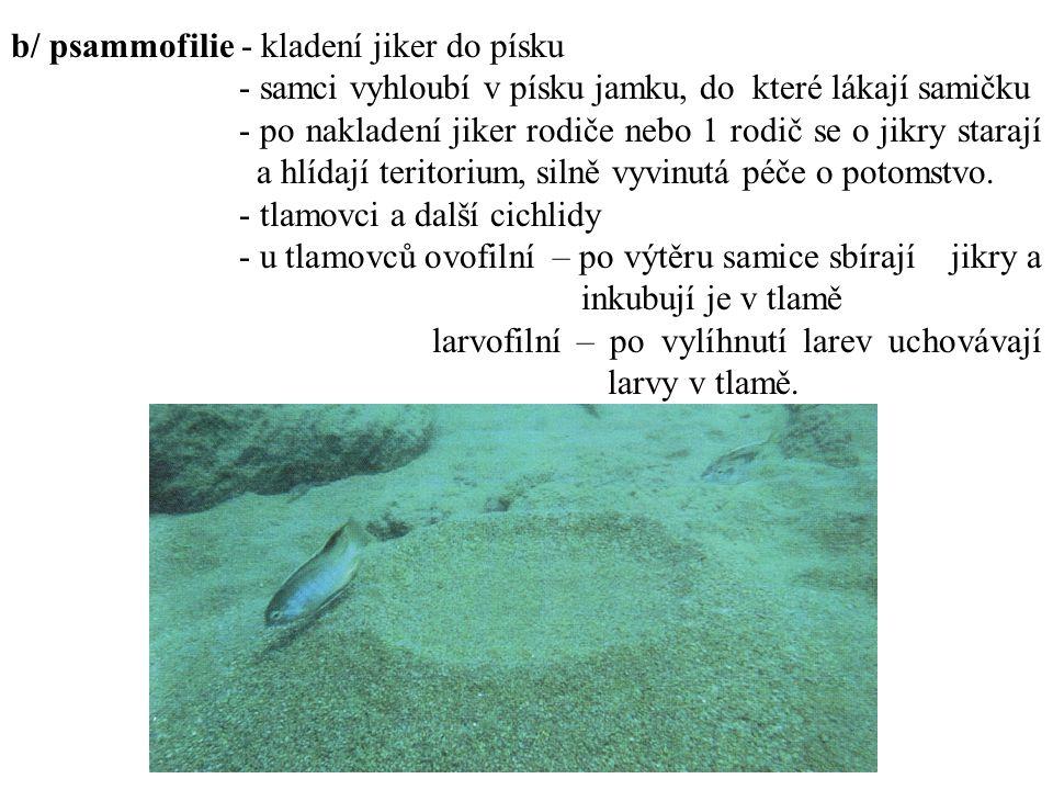 c/ speleofilie - kladení jiker do jeskyněk, dutin - cichlidy,čtverzubci, krunýřovci