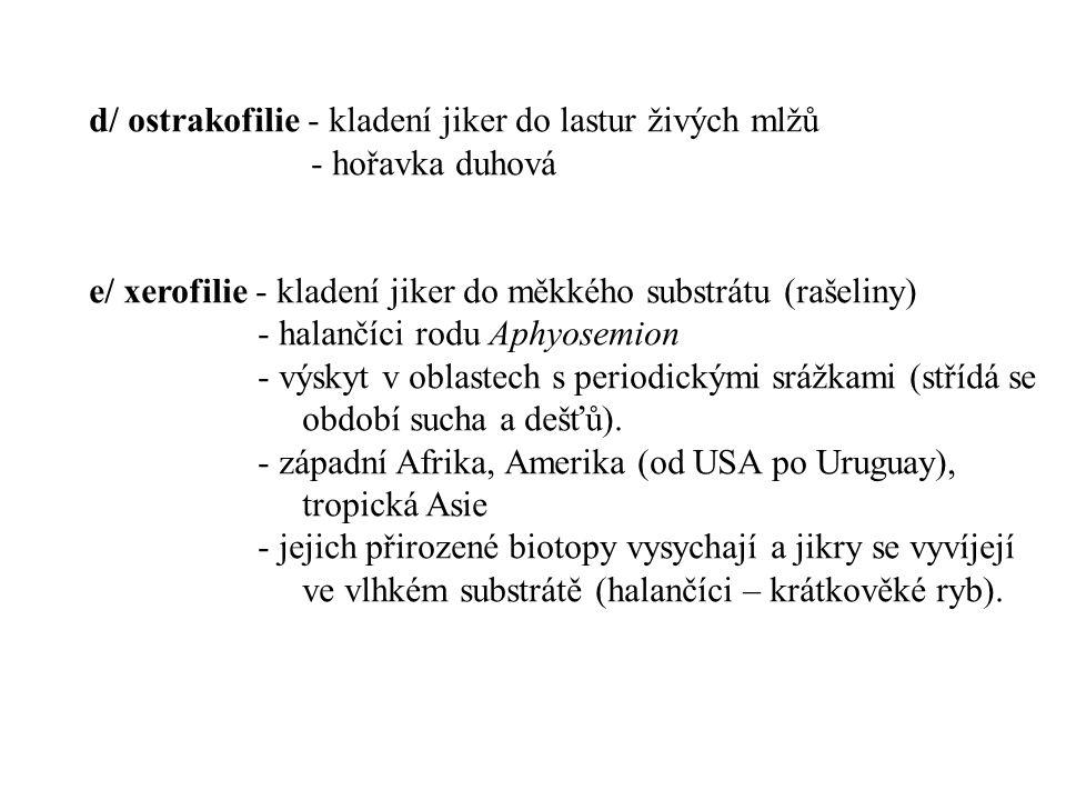 d/ ostrakofilie - kladení jiker do lastur živých mlžů - hořavka duhová e/ xerofilie - kladení jiker do měkkého substrátu (rašeliny) - halančíci rodu A