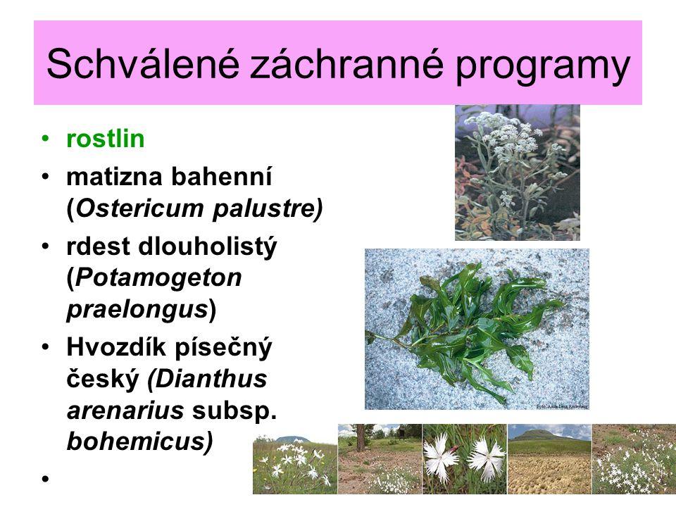Schválené záchranné programy rostlin matizna bahenní (Ostericum palustre) rdest dlouholistý (Potamogeton praelongus) Hvozdík písečný český (Dianthus a