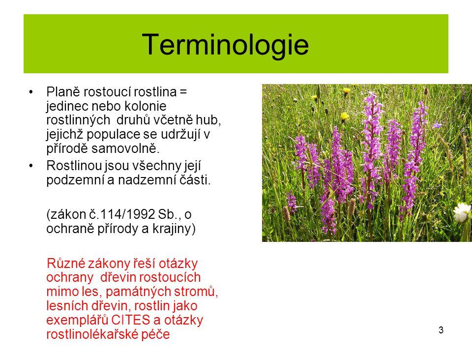 Terminologie Planě rostoucí rostlina = jedinec nebo kolonie rostlinných druhů včetně hub, jejichž populace se udržují v přírodě samovolně. Rostlinou j