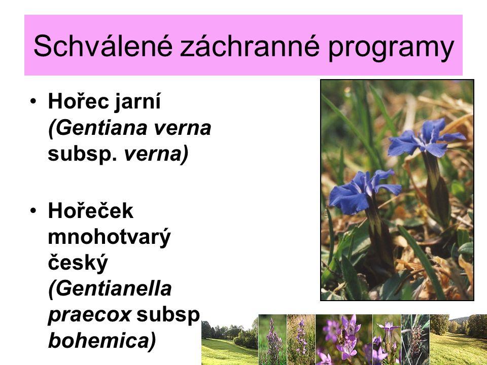 Schválené záchranné programy Hořec jarní (Gentiana verna subsp. verna) Hořeček mnohotvarý český (Gentianella praecox subsp. bohemica) 30