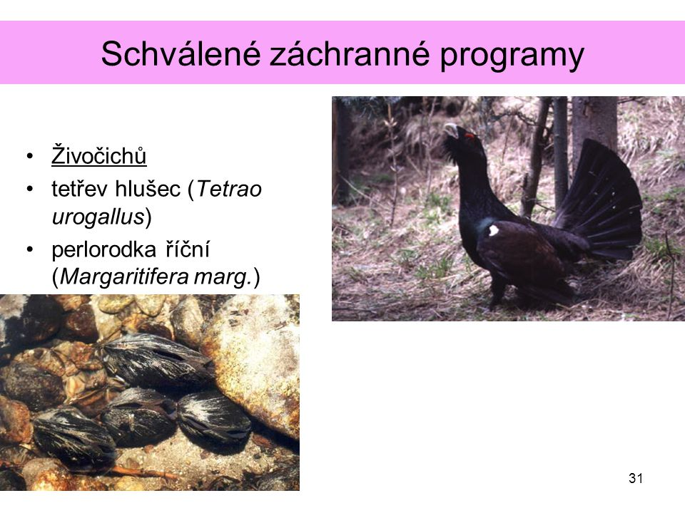 Schválené záchranné programy Živočichů tetřev hlušec (Tetrao urogallus) perlorodka říční (Margaritifera marg.) 31