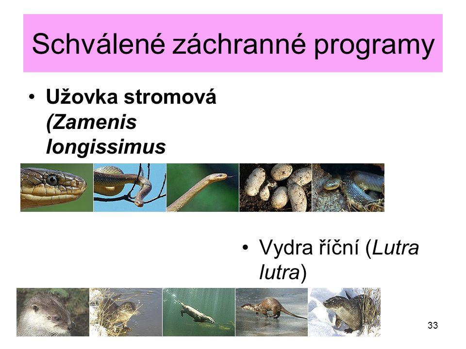 Schválené záchranné programy Užovka stromová (Zamenis longissimus Vydra říční (Lutra lutra) 33