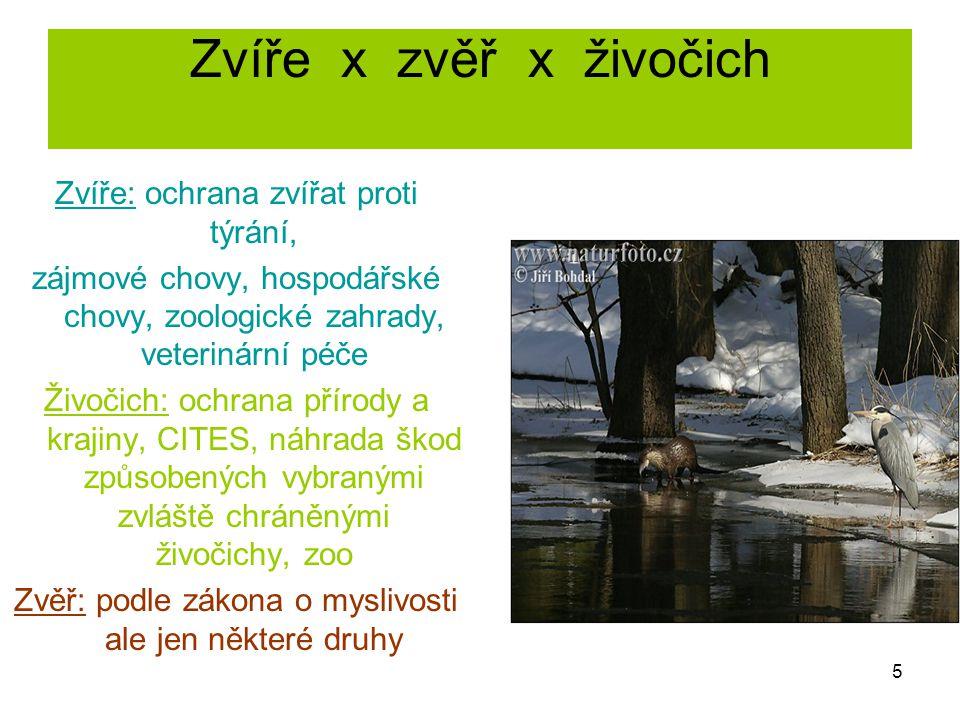 Zvíře x zvěř x živočich Zvíře: ochrana zvířat proti týrání, zájmové chovy, hospodářské chovy, zoologické zahrady, veterinární péče Živočich: ochrana p