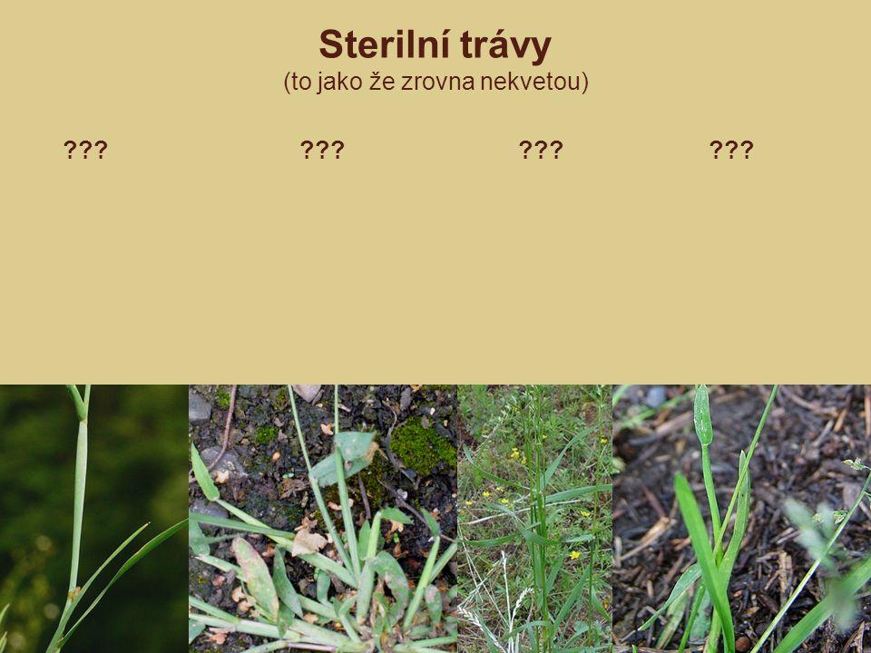 ??? ??? ??? ??? Sterilní trávy (to jako že zrovna nekvetou)