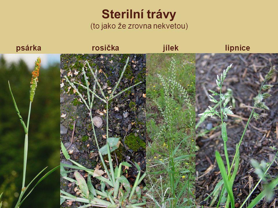 psárka rosička jílek lipnice Sterilní trávy (to jako že zrovna nekvetou)