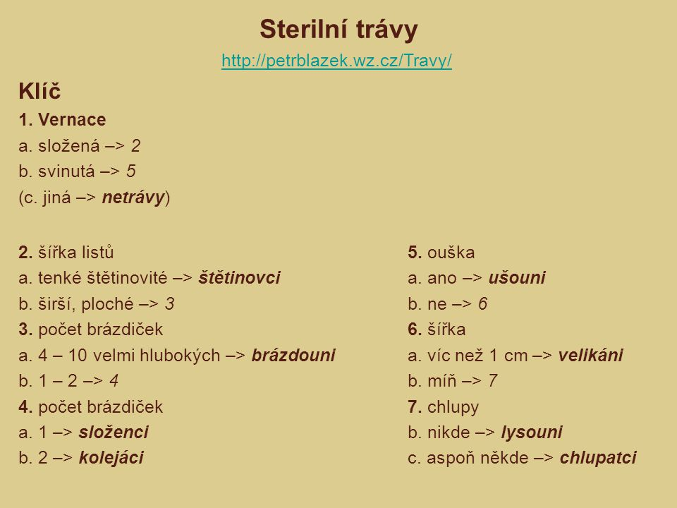 Sterilní trávy 2. šířka listů a. tenké štětinovité –> štětinovci b. širší, ploché –> 3 3. počet brázdiček a. 4 – 10 velmi hlubokých –> brázdouni b. 1