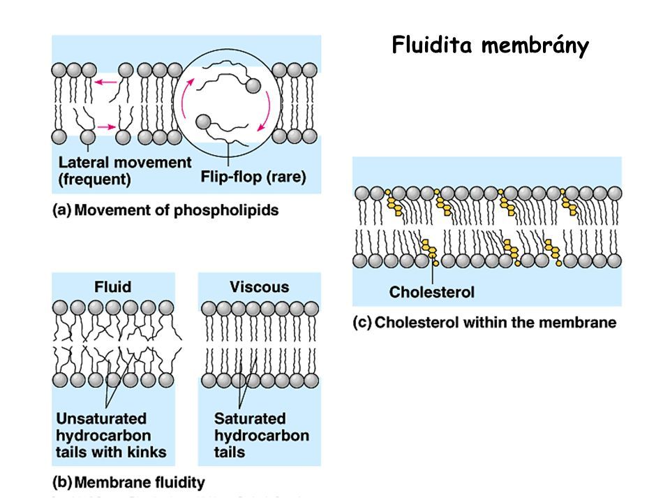 Fluidita membrány