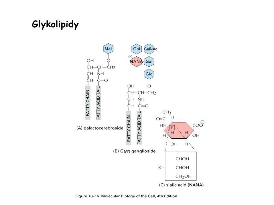Glykolipidy