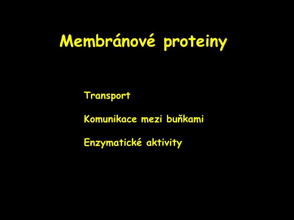 Membránové proteiny Transport Komunikace mezi buňkami Enzymatické aktivity
