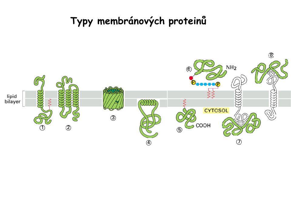 Typy membránových proteinů