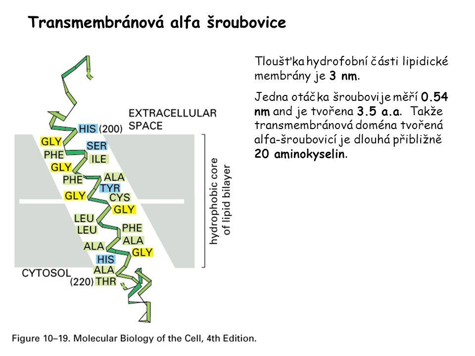 Tloušťka hydrofobní části lipidické membrány je 3 nm. Jedna otáčka šroubovije měří 0.54 nm and je tvořena 3.5 a.a. Takže transmembránová doména tvořen