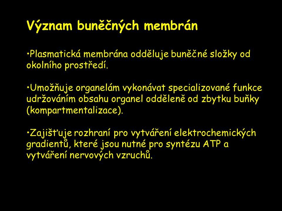 Význam buněčných membrán Plasmatická membrána odděluje buněčné složky od okolního prostředí. Umožňuje organelám vykonávat specializované funkce udržov