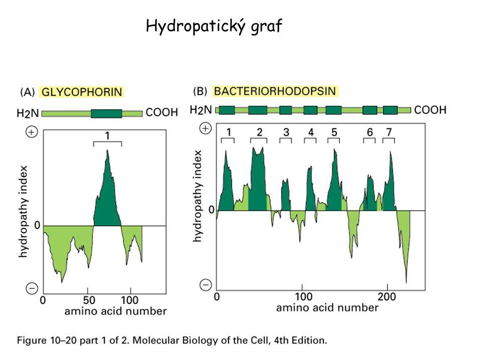 Hydropatický graf