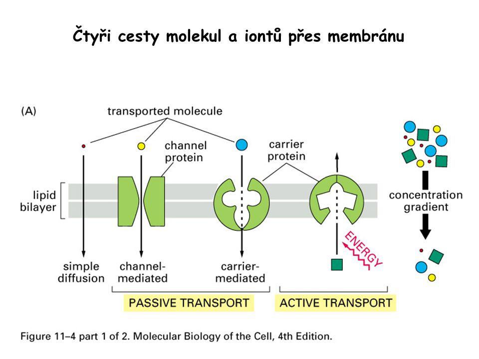 Čtyři cesty molekul a iontů přes membránu