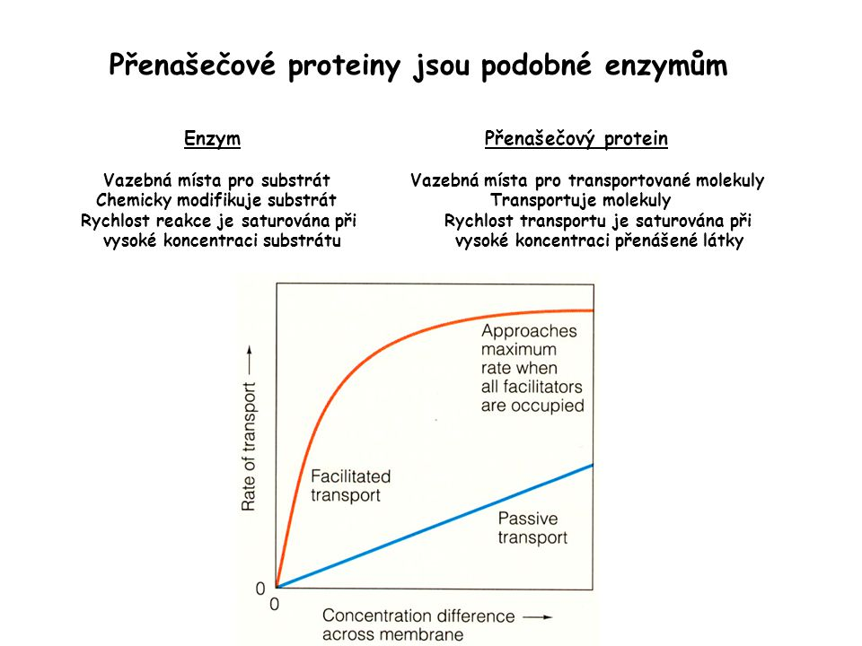 Přenašečové proteiny jsou podobné enzymům Enzym Přenašečový protein Vazebná místa pro substrát Vazebná místa pro transportované molekuly Chemicky modi