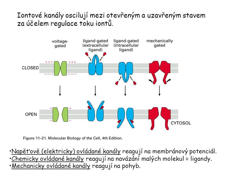 Iontové kanály oscilují mezi otevřeným a uzavřeným stavem za účelem regulace toku iontů. Napěťově (elektricky) ovládané kanály reagují na membránový p