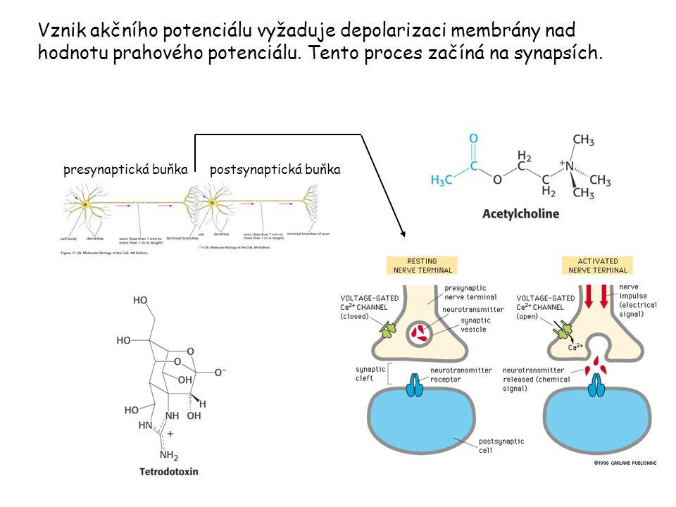 Vznik akčního potenciálu vyžaduje depolarizaci membrány nad hodnotu prahového potenciálu. Tento proces začíná na synapsích. presynaptická buňkapostsyn