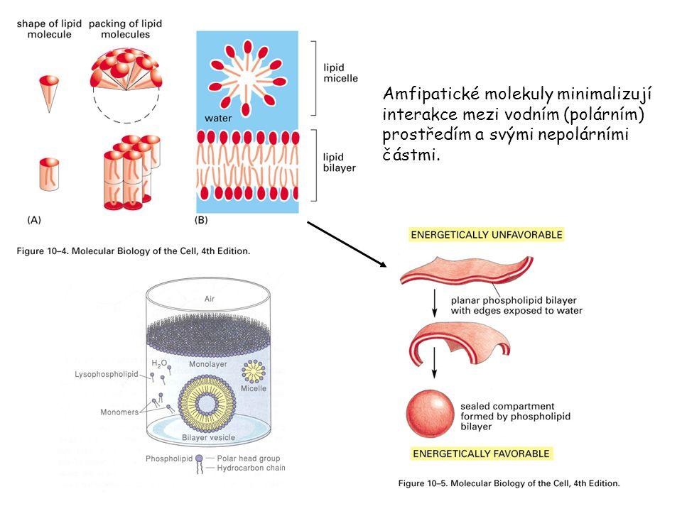 Amfipatické molekuly minimalizují interakce mezi vodním (polárním) prostředím a svými nepolárními částmi.