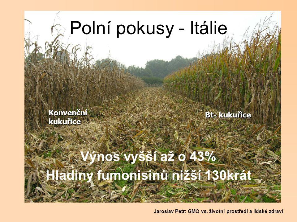 Polní pokusy - Itálie Výnos vyšší až o 43% Hladiny fumonisinů nižší 130krát Bt- kukuřice Konvenčníkukuřice Jaroslav Petr: GMO vs. životní prostředí a