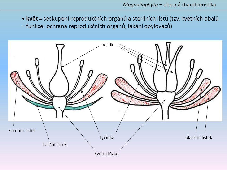 Magnoliophyta – obecná charakteristika květ = seskupení reprodukčních orgánů a sterilních listů (tzv. květních obalů – funkce: ochrana reprodukčních o