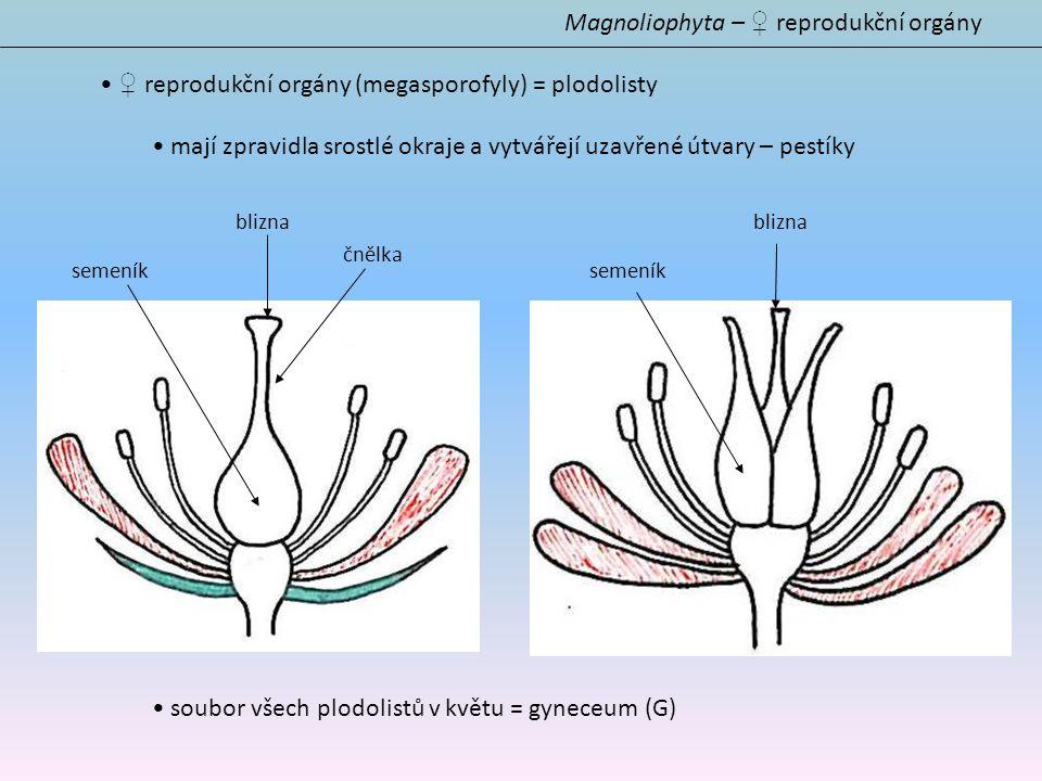 ♀ reprodukční orgány (megasporofyly) = plodolisty mají zpravidla srostlé okraje a vytvářejí uzavřené útvary – pestíky soubor všech plodolistů v květu