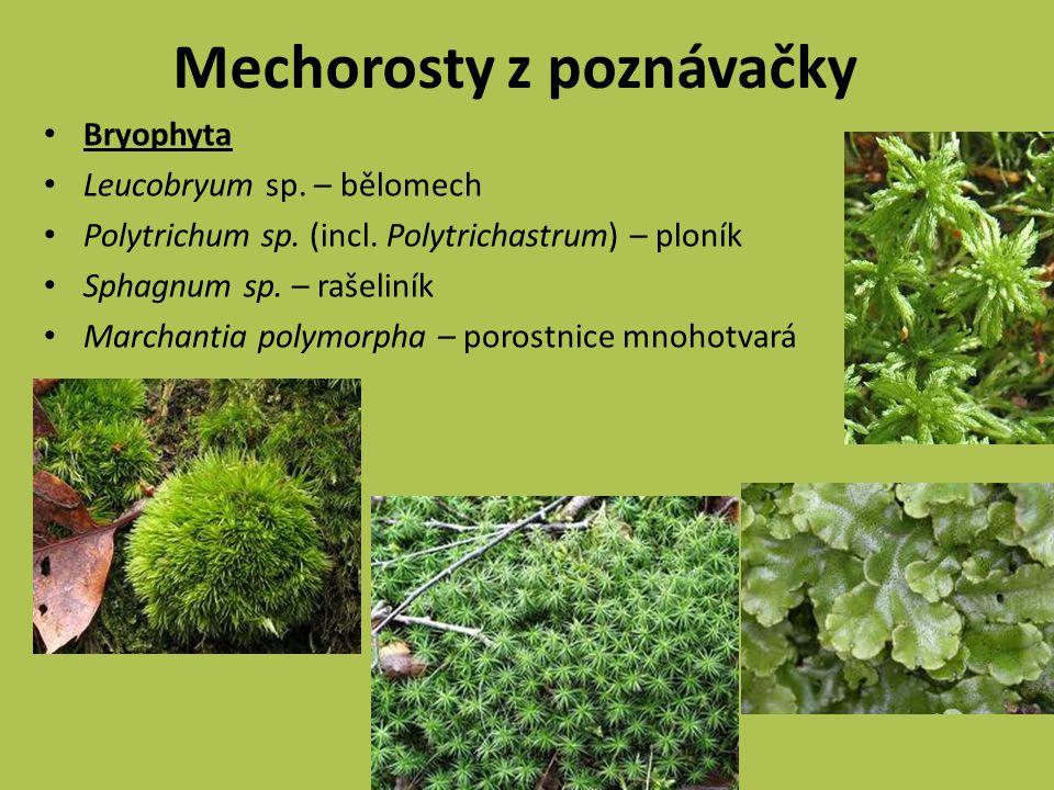Mechorosty z poznávačky Bryophyta Leucobryum sp.– bělomech Polytrichum sp.