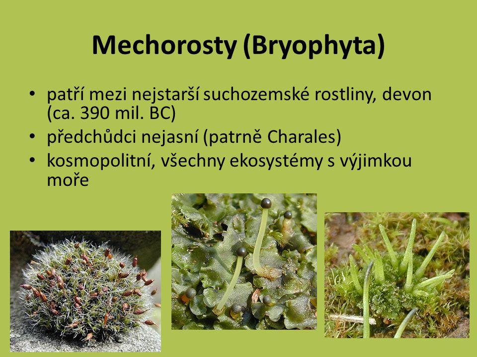 Mechorosty (Bryophyta) patří mezi nejstarší suchozemské rostliny, devon (ca.