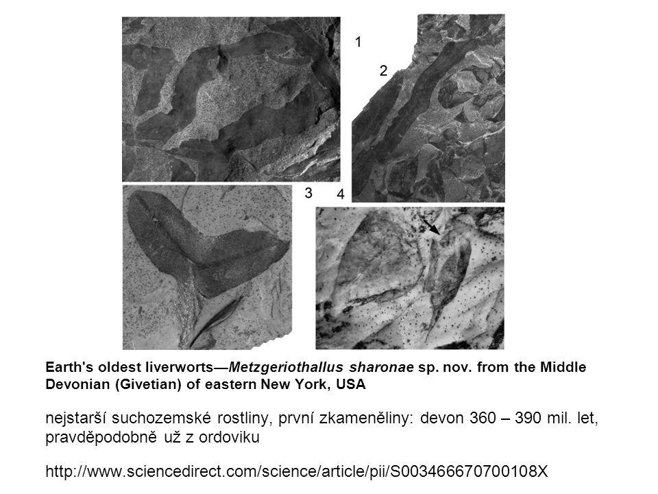 Earth s oldest liverworts—Metzgeriothallus sharonae sp.