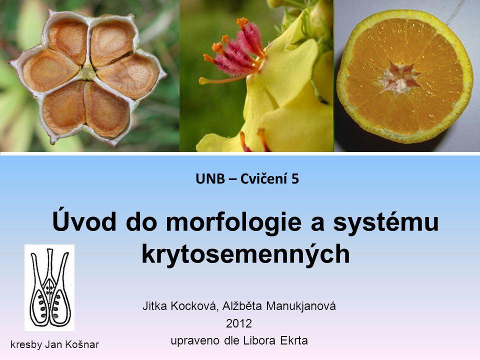 Úvod do morfologie a systému krytosemenných kresby Jan Košnar Jitka Kocková, Alžběta Manukjanová 2012 upraveno dle Libora Ekrta UNB – Cvičení 5