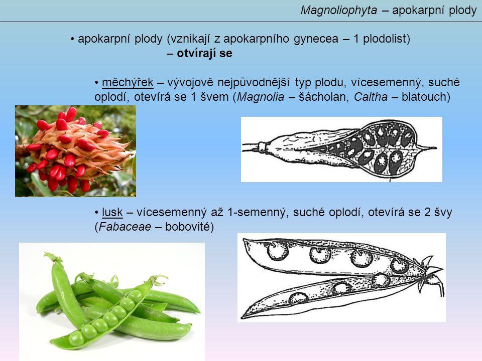 apokarpní plody (vznikají z apokarpního gynecea – 1 plodolist) – otvírají se měchýřek – vývojově nejpůvodnější typ plodu, vícesemenný, suché oplodí, otevírá se 1 švem (Magnolia – šácholan, Caltha – blatouch) lusk – vícesemenný až 1-semenný, suché oplodí, otevírá se 2 švy (Fabaceae – bobovité) Magnoliophyta – apokarpní plody