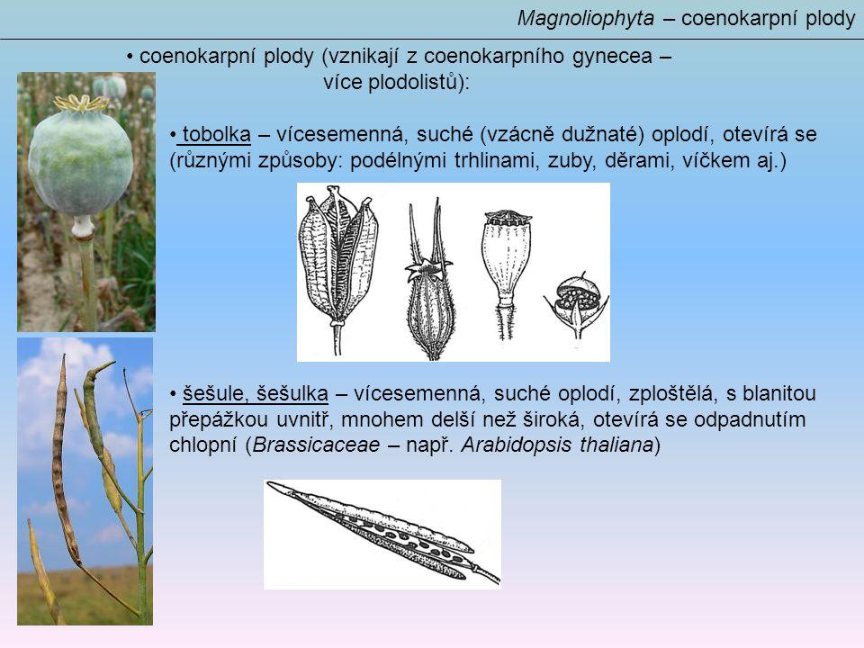 Magnoliophyta – coenokarpní plody coenokarpní plody (vznikají z coenokarpního gynecea – více plodolistů): tobolka – vícesemenná, suché (vzácně dužnaté) oplodí, otevírá se (různými způsoby: podélnými trhlinami, zuby, děrami, víčkem aj.) šešule, šešulka – vícesemenná, suché oplodí, zploštělá, s blanitou přepážkou uvnitř, mnohem delší než široká, otevírá se odpadnutím chlopní (Brassicaceae – např.