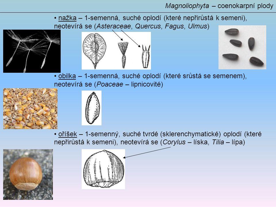 Magnoliophyta – coenokarpní plody nažka – 1-semenná, suché oplodí (které nepřirůstá k semeni), neotevírá se (Asteraceae, Quercus, Fagus, Ulmus) obilka – 1-semenná, suché oplodí (které srůstá se semenem), neotevírá se (Poaceae – lipnicovité) oříšek – 1-semenný, suché tvrdé (sklerenchymatické) oplodí (které nepřirůstá k semeni), neotevírá se (Corylus – líska, Tilia – lípa)