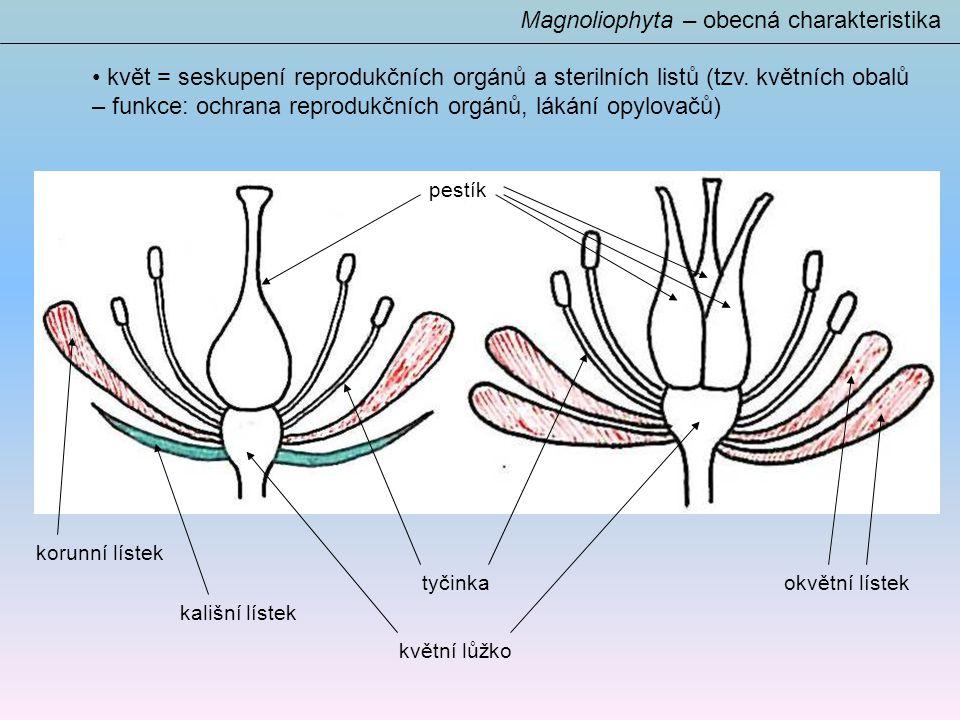 Magnoliophyta – obecná charakteristika květ = seskupení reprodukčních orgánů a sterilních listů (tzv.
