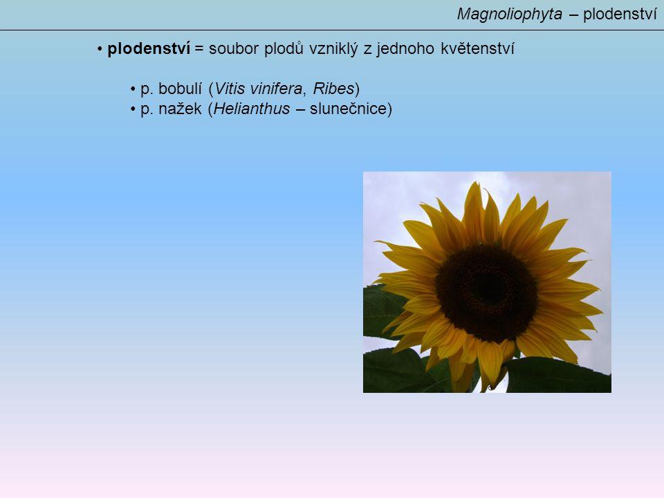 Magnoliophyta – plodenství plodenství = soubor plodů vzniklý z jednoho květenství p.