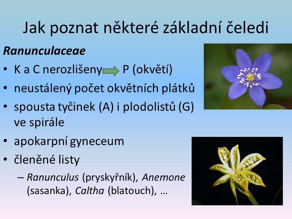 Jak poznat některé základní čeledi Ranunculaceae K a C nerozlišeny P (okvětí) neustálený počet okvětních plátků spousta tyčinek (A) i plodolistů (G) ve spirále apokarpní gyneceum členěné listy – Ranunculus (pryskyřník), Anemone (sasanka), Caltha (blatouch), …