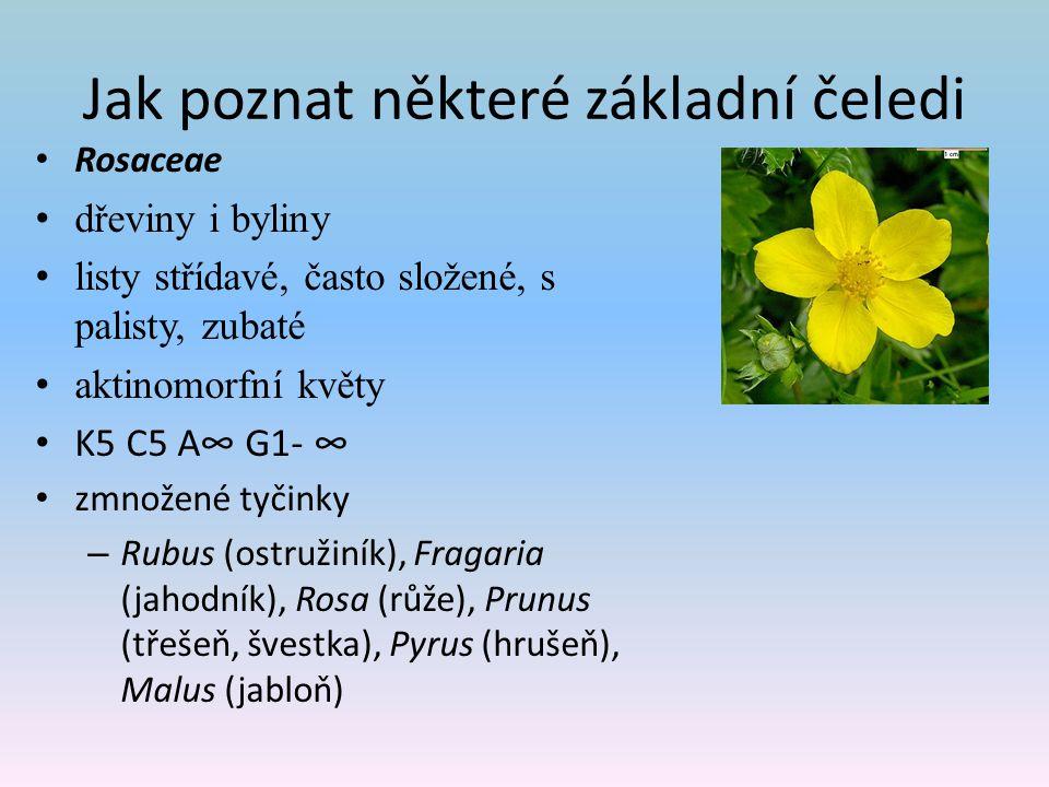 Jak poznat některé základní čeledi Rosaceae dřeviny i byliny listy střídavé, často složené, s palisty, zubaté aktinomorfní květy K5 C5 A∞ G1- ∞ zmnožené tyčinky – Rubus (ostružiník), Fragaria (jahodník), Rosa (růže), Prunus (třešeň, švestka), Pyrus (hrušeň), Malus (jabloň)