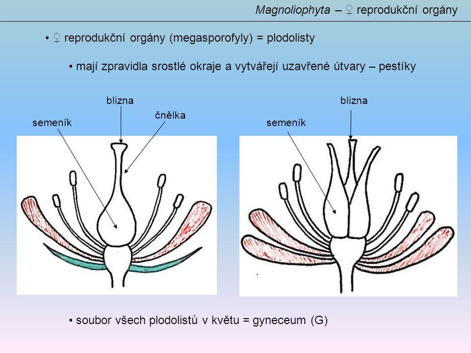 ♀ reprodukční orgány (megasporofyly) = plodolisty mají zpravidla srostlé okraje a vytvářejí uzavřené útvary – pestíky soubor všech plodolistů v květu = gyneceum (G) Magnoliophyta – ♀ reprodukční orgány semeník čnělka blizna semeník blizna