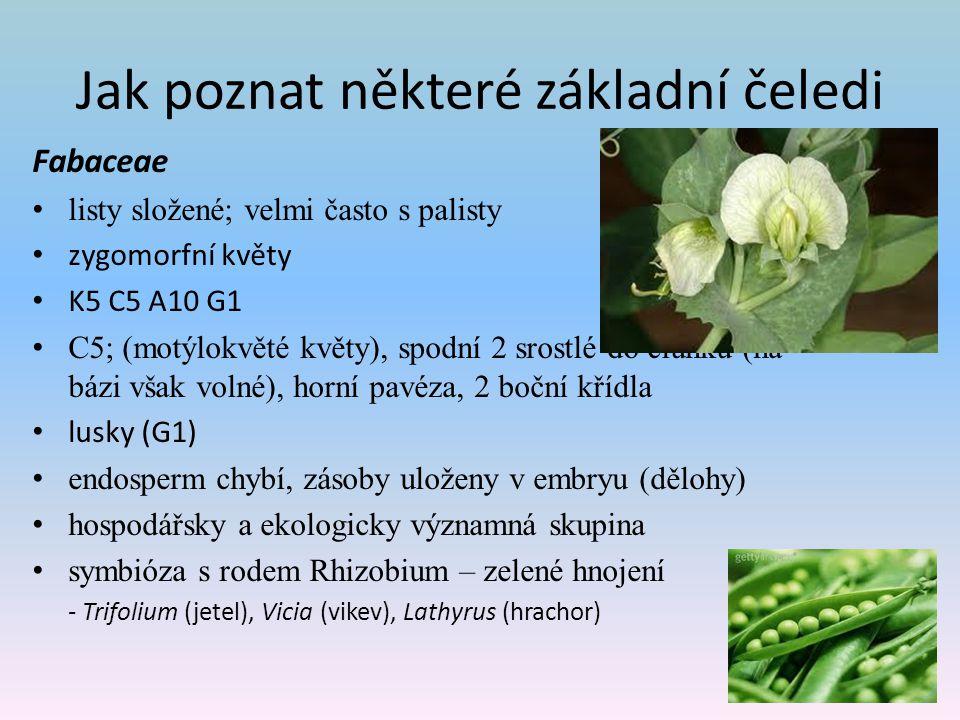 Jak poznat některé základní čeledi Fabaceae listy složené; velmi často s palisty zygomorfní květy K5 C5 A10 G1 C5; (motýlokvěté květy), spodní 2 srostlé do člunku (na bázi však volné), horní pavéza, 2 boční křídla lusky (G1) endosperm chybí, zásoby uloženy v embryu (dělohy) hospodářsky a ekologicky významná skupina symbióza s rodem Rhizobium – zelené hnojení - Trifolium (jetel), Vicia (vikev), Lathyrus (hrachor)