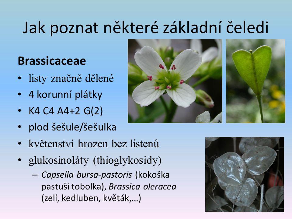 Jak poznat některé základní čeledi Brassicaceae listy značně dělené 4 korunní plátky K4 C4 A4+2 G(2) plod šešule/šešulka květenství hrozen bez listenů glukosinoláty (thioglykosidy) – Capsella bursa-pastoris (kokoška pastuší tobolka), Brassica oleracea (zelí, kedluben, květák,…)