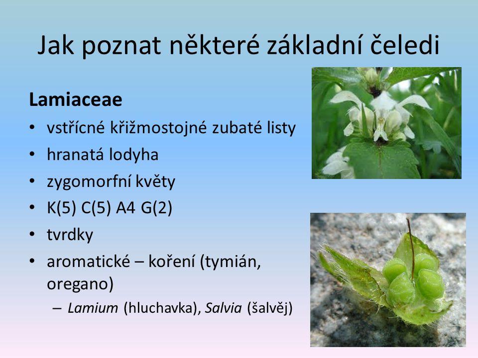 Jak poznat některé základní čeledi Lamiaceae vstřícné křižmostojné zubaté listy hranatá lodyha zygomorfní květy K(5) C(5) A4 G(2) tvrdky aromatické – koření (tymián, oregano) – Lamium (hluchavka), Salvia (šalvěj)