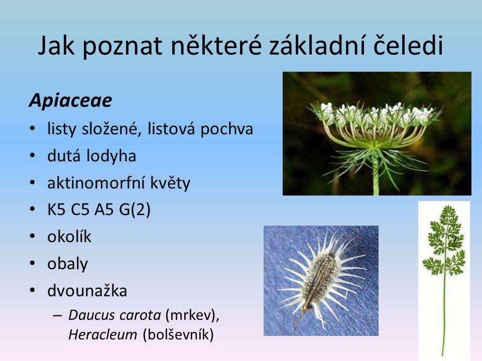Jak poznat některé základní čeledi Apiaceae listy složené, listová pochva dutá lodyha aktinomorfní květy K5 C5 A5 G(2) okolík obaly dvounažka – Daucus carota (mrkev), Heracleum (bolševník)