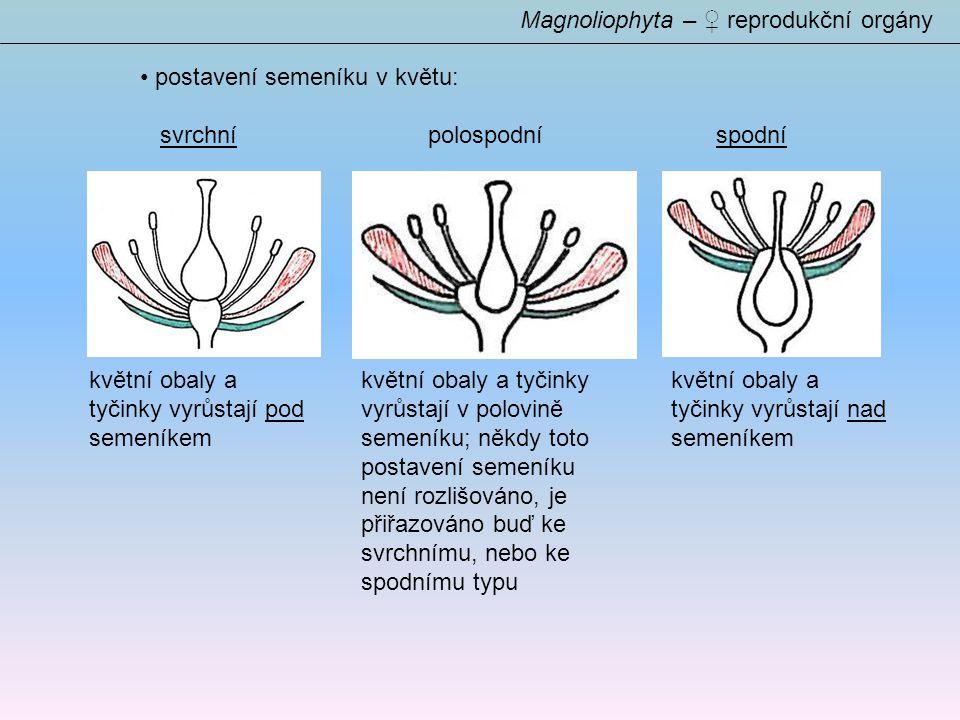 Magnoliophyta – ♀ reprodukční orgány postavení semeníku v květu: svrchnípolospodníspodní květní obaly a tyčinky vyrůstají pod semeníkem květní obaly a tyčinky vyrůstají nad semeníkem květní obaly a tyčinky vyrůstají v polovině semeníku; někdy toto postavení semeníku není rozlišováno, je přiřazováno buď ke svrchnímu, nebo ke spodnímu typu