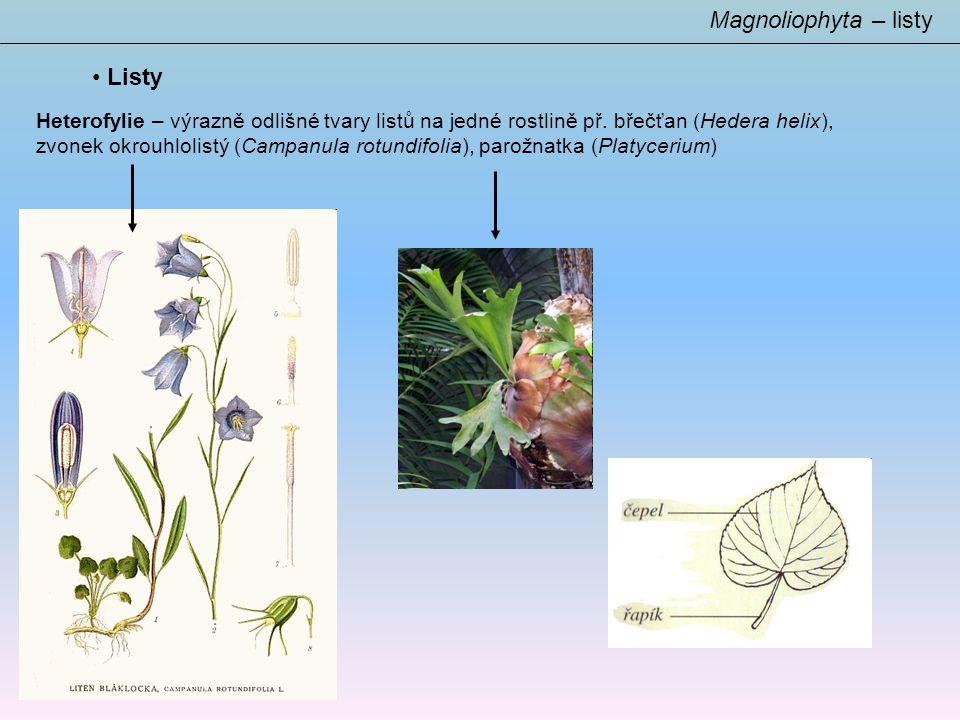 Listy Magnoliophyta – listy Heterofylie – výrazně odlišné tvary listů na jedné rostlině př.