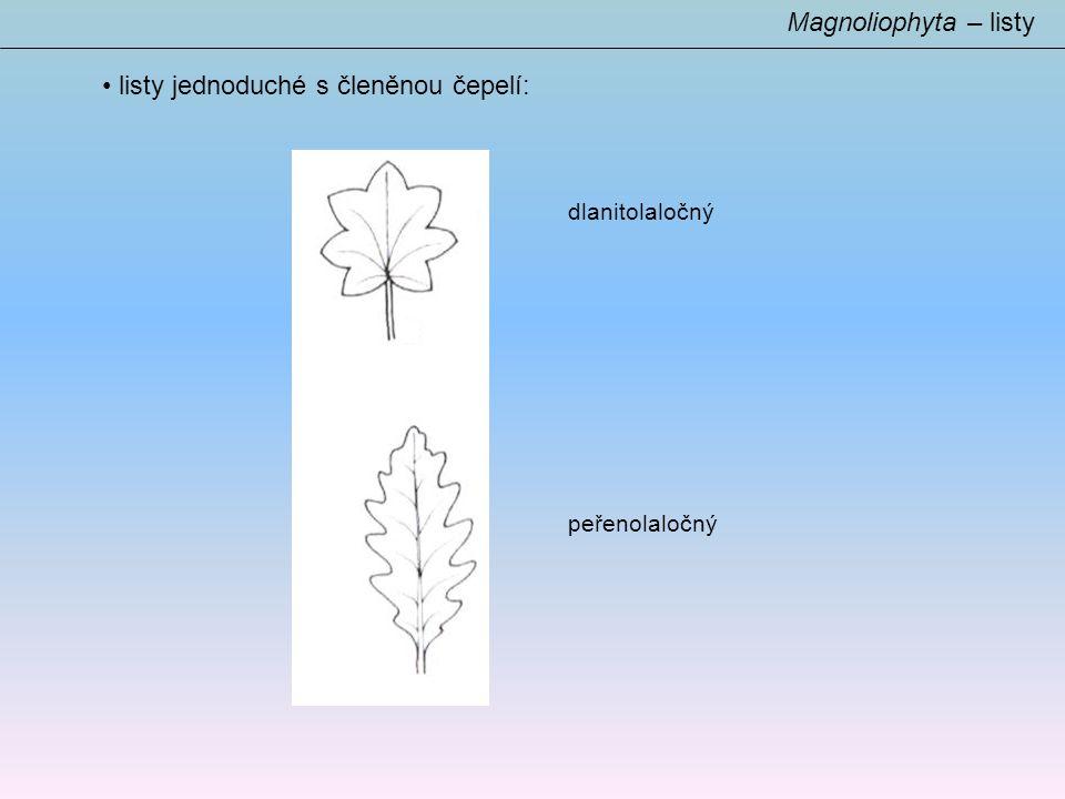 listy jednoduché s členěnou čepelí: Magnoliophyta – listy dlanitolaločný peřenolaločný