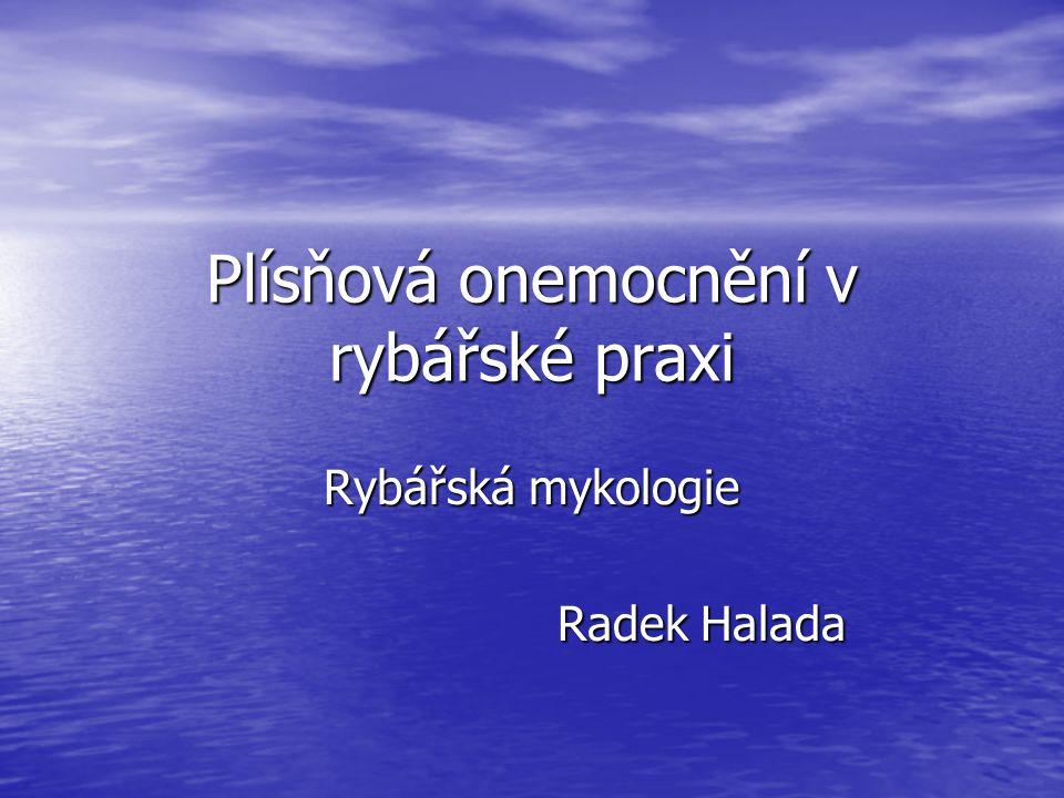 Plísňová onemocnění v rybářské praxi Rybářská mykologie Radek Halada Radek Halada