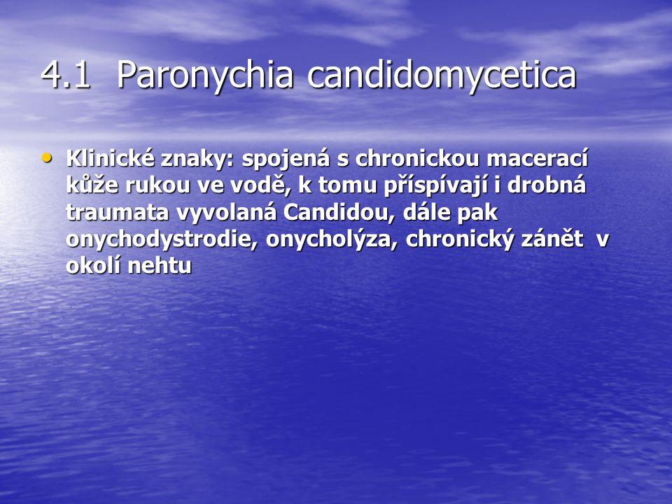 4.1 Paronychia candidomycetica Klinické znaky: spojená s chronickou macerací kůže rukou ve vodě, k tomu příspívají i drobná traumata vyvolaná Candidou, dále pak onychodystrodie, onycholýza, chronický zánět v okolí nehtu Klinické znaky: spojená s chronickou macerací kůže rukou ve vodě, k tomu příspívají i drobná traumata vyvolaná Candidou, dále pak onychodystrodie, onycholýza, chronický zánět v okolí nehtu