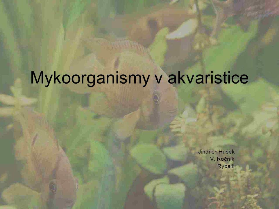 Mykoorganismy v akvaristice Jindřich Hušek V. Ročník Ryba II